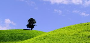 osamljeno drevo