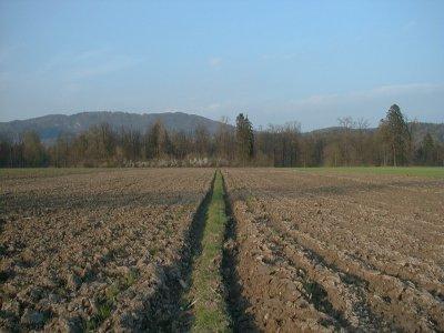 perspektiva na polju