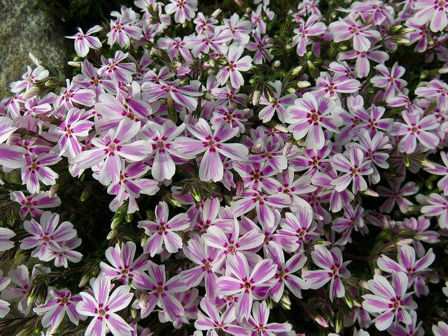 Alergije – cvetni prah leske in črne jelše
