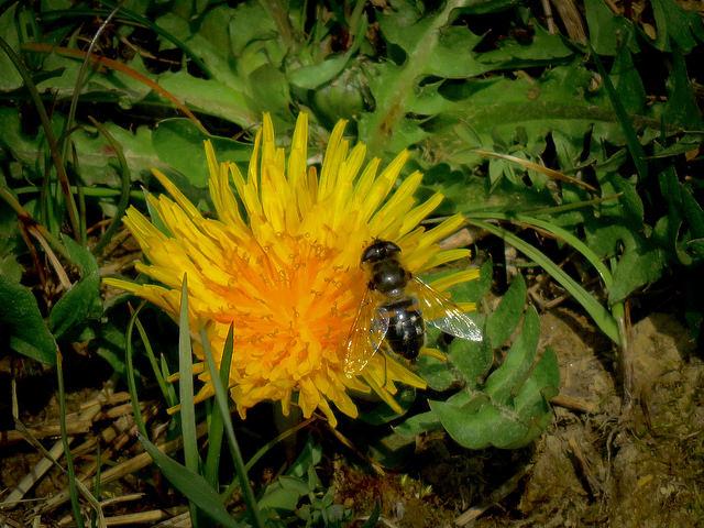 Alergije na pike insektov
