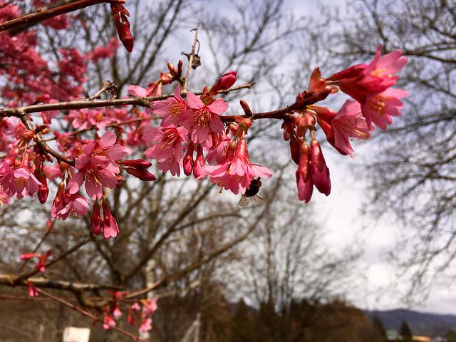 Alergije na cvetni prah – odpravite jih!
