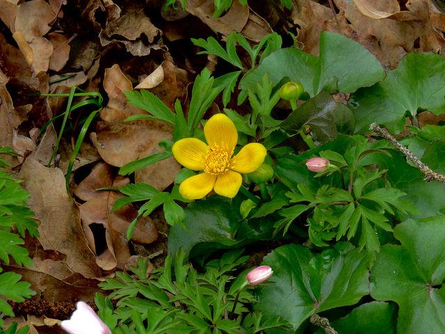 Zdravljenje alergij na cvetni prah oz. pelode