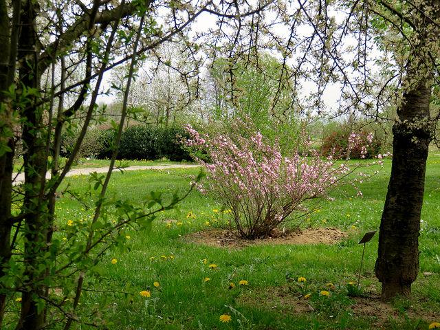 Alergije na cvetni prah